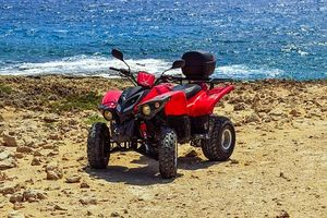 Rent A Buggy - 2968 bestsellers
